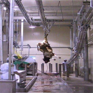 Manufacture industry equipment for acrobatics and gymnastics