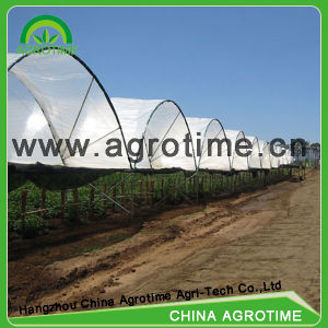 Low Cost Economical Multi Span Film Greenhouse (CMY9343)
