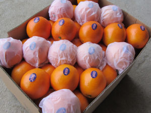 Wholesale China Orange