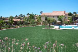 Beautiful Floor Cover Landscape Gardening Grass pictures & photos