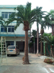 Artificial Mexico Date Palm Tree pictures & photos