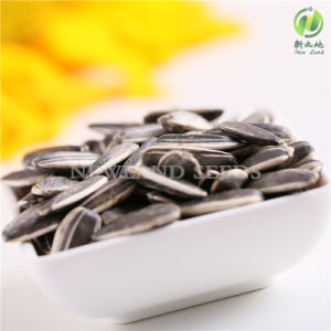 Export Sunflower Seeds 5009 for Wholesale