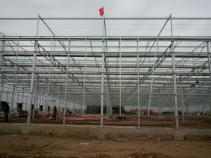 Venlo Style Polycarbonate Sheet / PC Sheet Greenhouse with Galvanized Steel Frame