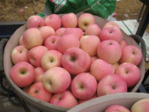 2015 Crop Good Delicous Apple pictures & photos