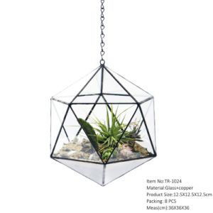 Hexagon Shape Reptile Glass Terrarium Preserved Fresh Flower pictures & photos
