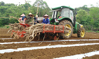 Both Wholesale and Retails Combine Sugar Cane Seed Planter /Cane Seed Planting Machine Wide-Narrow Row Space