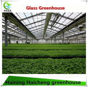 Glass Greenhouse Used for Flower Growing with Steel Structure