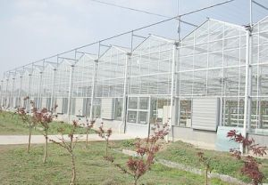 Factory Direct Supply Multi-Span Venlo Type Glass Greenhouse