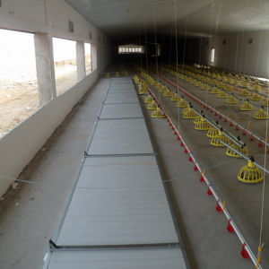 Broiler Chicken Farming Poultry Farming Project
