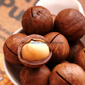 Stailess Steel Macadamia Nut Opening Machine with Best Price