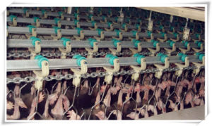 Poultry Slaughtering Equipment: Precooler/Pre-Cooling Equipment pictures & photos