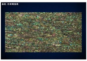 AAA Grade New Zealand Abalone Shell Sheet in Red