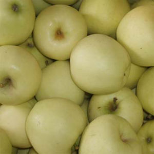 Fresh Golden Delicious Apple (18kg 100-113-125)