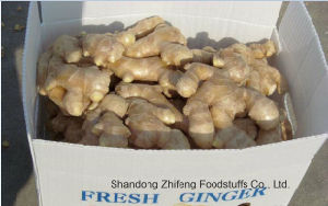 2017 Fresh Ginger with Exporting Quality pictures & photos