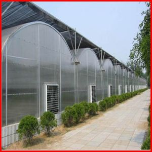 Agriculture Farm Multi-Span Plastic Film Greenhouse for Vegetables pictures & photos