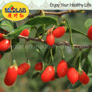 Medlar Goji Berry Wolfberry Health Care