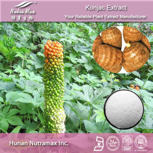 Pure Konjac Extract (glucomannan 90%~95%)