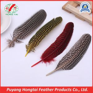 Natural Dyed Plumage Bulk Guinea Fowl Wing Quills Feather for Sale