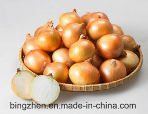 5cm-9cm Competitive Quality Fresh Yellow Onion pictures & photos