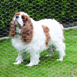 Galvanized Hexagonal Wire Mesh Netting for Chicken Rabbit Dog Cage pictures & photos
