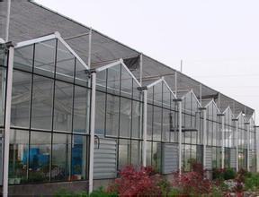 Quality Modern Design PC/Film Multi-Span Greenhouse