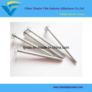 Clout Steel Nails with Competitive Prices and From Directly Factory