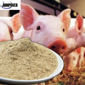 Seaweed Ulva Lactuca Powder for Sale, Feed Additive.