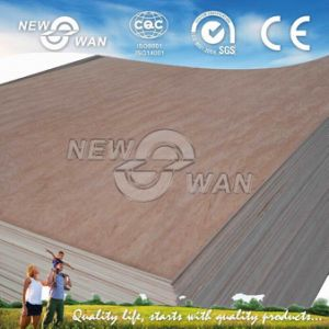 Bintangor Face Commercial Plywood (NBP-0116) pictures & photos