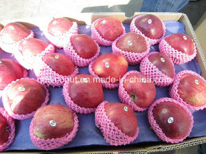 New Crop Huaniu Apple pictures & photos