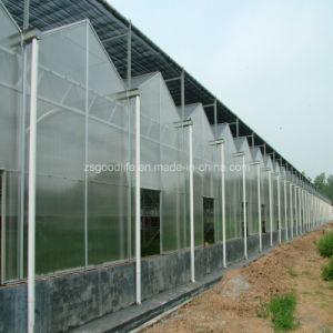 Polycarbonate Sheet for Greenhouse; Polycarbonate Hollow Sheet for Greenhouse; Polycarbonate Twin Wall Sheet; Polycarbonate Triple Wall Sheet pictures & photos