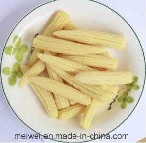 Canned Whole Baby Corn with Cheap Price pictures & photos