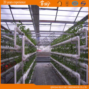 Commercial Multispan Glass Greenhouse for Vegetable pictures & photos
