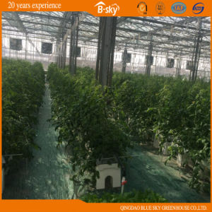 Vegetable Growing Intelligent Glass Greenhouse China Supplier pictures & photos