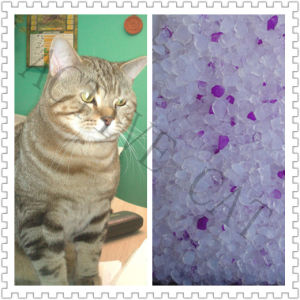 Silica Gel Cat Litter with Purple Adds pictures & photos