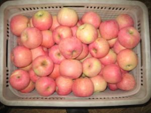 Fresh Apple pictures & photos