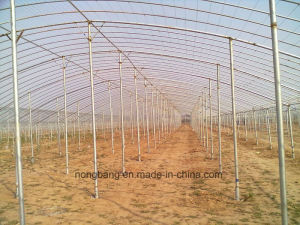 Factory Direct Tunnel Plastic Film Greenhouse Progect of Designer pictures & photos
