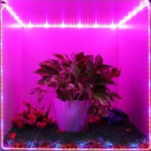 T8 Grow Light Low Price Plant Grow Lights Red Spectrum Led Indoor Lighting