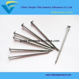 Factory Big Head Nails with Lowest Prices and Best Quality