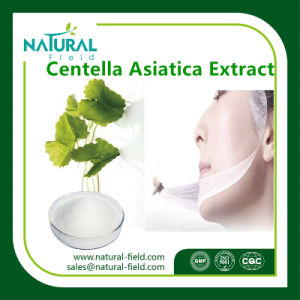 100% Pure Natural Plant Extract Centella Asiatica Extract Raw Material   in Cosmetic