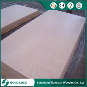 Okoume / Bintangor / Oak / Teak / Birch Commercial Plywood