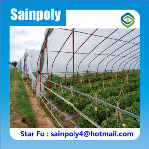 Hot Sale Tunnel Greenhouse for Vegetable Flower Fruit pictures & photos