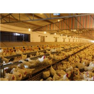 Poultry Equipment Automatic Laying Nest
