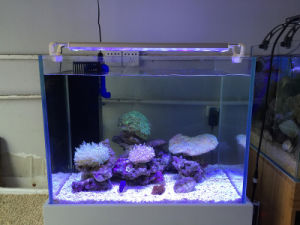 Adjustable Full Spectrum Remote LED Aquarium Lights