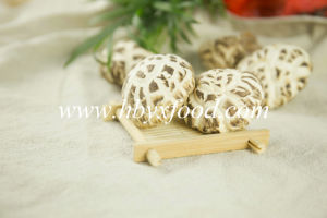 Dried White Flower Mushroom Quliaty Vegetable pictures & photos