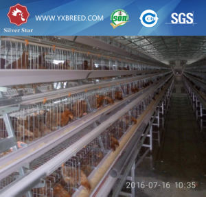 Layer Chicken Cage Poultry Farming Machinery Machines Best Selling in Africa pictures & photos