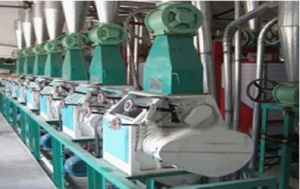 Floor Type Flour Making Equipments