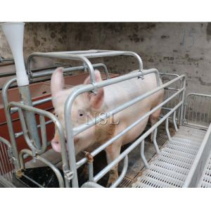 China Pig Farm Pen Design Single Double Sow Farrowing Crate For Pigs