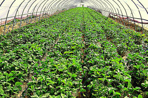 Agriculture Greenhouse Anti Insect Net pictures & photos