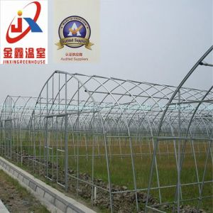 Single-Span Tunnel Greenhouse for Vegetable Grower with Steel Structure pictures & photos