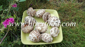 Dried Vegetable White Flower Shiitake Mushroom pictures & photos